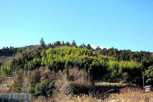 1月の森づくり前の放置竹林状況写真(2011年1月22日撮影)