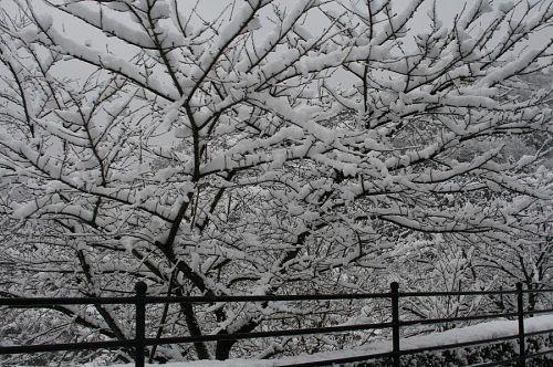 見よ!この降り積もる雪。豪雪と呼んでもいいでしょうか?