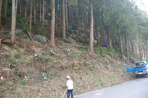 今日の森づくりは、ギャラリーそま人の前の杉の木の間伐。