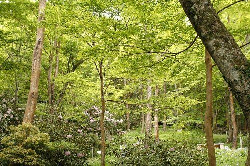ご主人の山田さんの軽快な案内で新緑が美しい園内の散策を楽しみます。