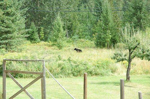 熊さん、それより近くに来なくていいよ!