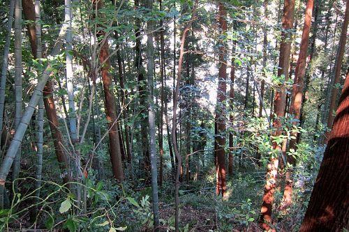 急斜面に竹や雑木が入り組んで、下りていくのも一苦労。(2011年9月24日撮影)