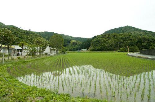 仕事場から稲の育つ課程を見ることができます。収穫が楽しみですね♪