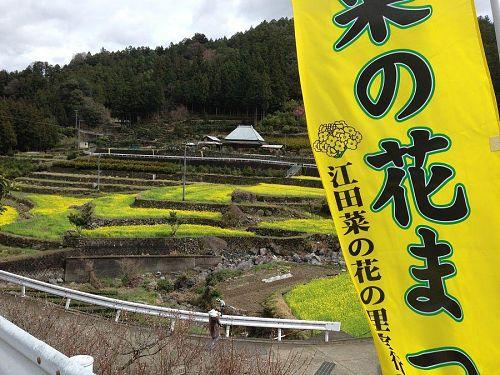 毎年3月末に行われる江田の菜の花ウォーク