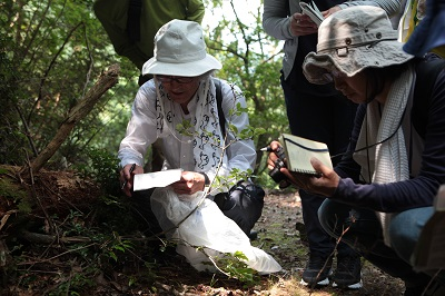大粟山での植生調査(8月)