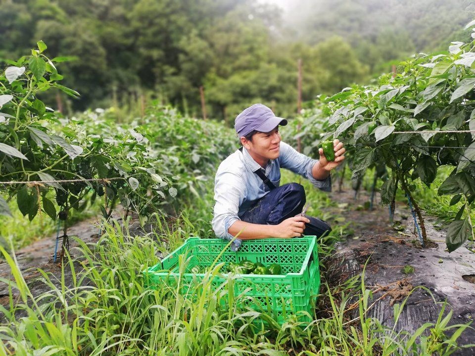 農業で自立することが一番の目標ですね