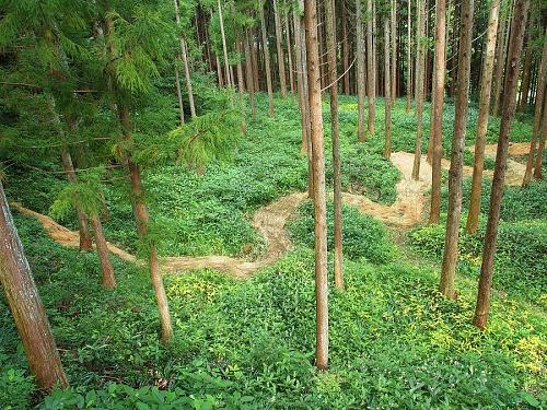 Rice becomes a river(Oawa-yama Mountain)