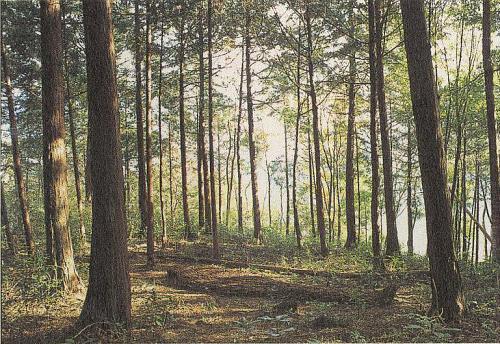 """Strijdom van der Merwe """"Sleeping Forest"""" 2003"""