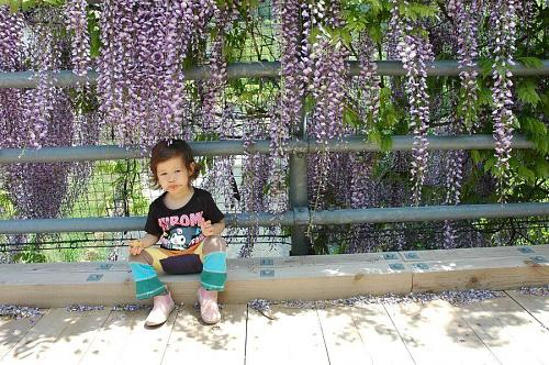 Sofie, with ice cream all over her face, under the wisteria out back of Kamiyama Onsen