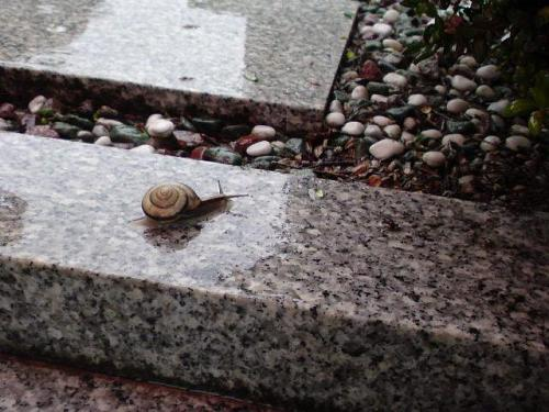 No frogs today, but we found a lovely snail. (Photo: Sofie)