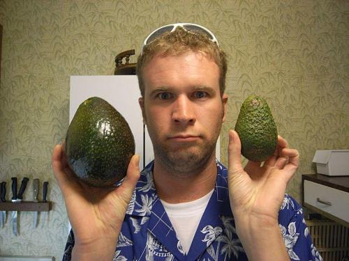 My little brother Geoff is the model in this avocado comparison. The one on the right, representing regular size, is actually rather large too. The mega-avo on the left had delicious soft flesh inside. We bought it at a farmer's roadside stand on the way back from Hana.