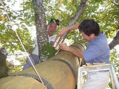 東谷師匠と森さん。木のお仕事、このお二人にできない仕事はありません。